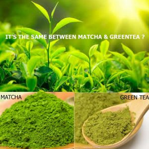 matcha vs green tea